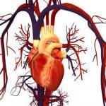 7 simptome ale inimii care iti arata ca trebuie sa mergi imediat la medic